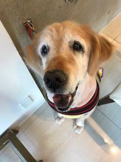 愛犬の中耳炎、外耳炎を守る「イヤープロテクター」